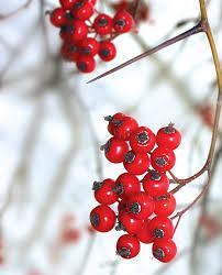native indiana plants native plants to know u0026 grow michiana house u0026 home