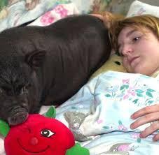 Einkaufen Zu Hause Psychologie Wenn Menschen Ihre Haustiere Zu Sehr Lieben Welt