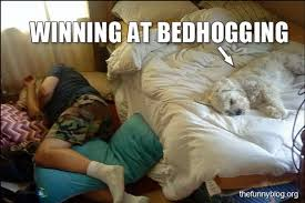 Dog In Bed Meme - 14 things only dog owners will understand her ie