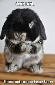 Sunday Morning Memes - 20 hilarious rabbit memes for your sunday morning i can has