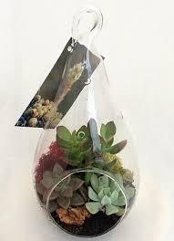 amazon com teardrop hanging succulent terrarium kit easy to