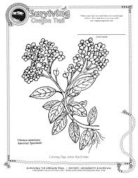 california state flag coloring page coloring pages archives surviving the oregon trail