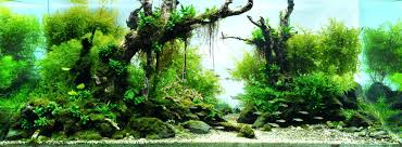 amano aquascape aquascaping amano homedesignpicture win