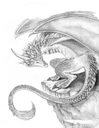 dragon sketches in pencil 1000 images about dragon drawing on