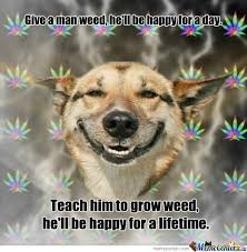 Stoned Dogs Meme - stoned dogs wisdom by jimmie meme center