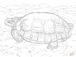 agassizs desert tortoise coloring page free printable coloring pages