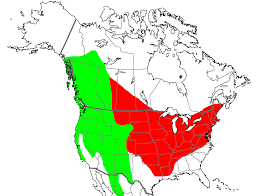 East America Map by Identifying Eastern And Western Warbling Vireos U2013 Earbirding