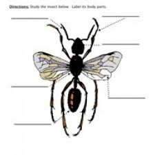 insect parts worksheet winged bugs