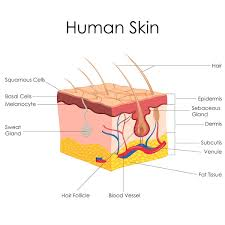 Vitamin D And Tanning Beds Idaho Falls Skin Cancer Treatment High Valley Dermatology
