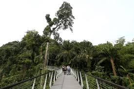 Botanical Gardens In Singapore by Century Old Forest At Botanic Gardens Opens Todayonline