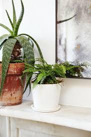 533 best living room plants images on pinterest indoor plants
