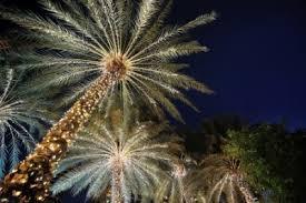 palm tree christmas tree lights need palm tree christmas lights the top 5 options