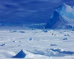 imagenes de la antartida curiosidades sobre la antártida protección