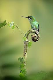 Backyard Birds Utah Wild About Birds Nature Center In Layton Utah Sells Everything To