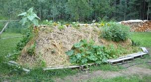 the many benefits of hugelkultur permaculture magazine