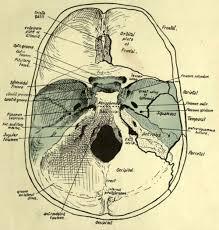 Human Anatomy Skull Bones Cranial Bones Part 3
