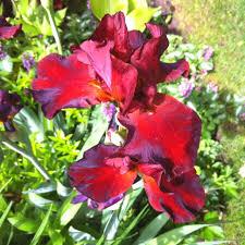 Zone Gardening - 156 best plants zone 3 images on pinterest flowers garden