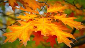 autumn pumpkin wallpaper widescreen misc pumpkins autumn pumpkin vegetable high quality picture for
