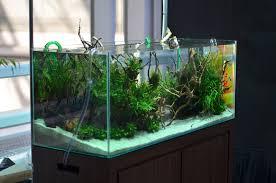membuat filter aquarium kecil cara membuat aquarium sederhana dan mudah untuk ikan hias