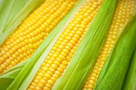 how to grow corn in your garden