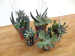 selling succulents as holiday plants garden center magazine