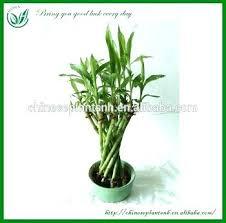 Indoor Plant For Office Desk Office Desk Plants Tag Office Desk Plant