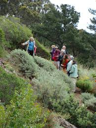 native plants california creating a drought resilient garden with california natives bay