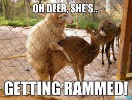 Oh Deer Meme - oh deer she s getting rammed rammed quickmeme