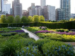 your guide to viewing spring flowers in chicago