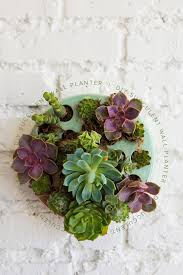 succulent planter diy succulent wall planter u0026 video the house that lars built