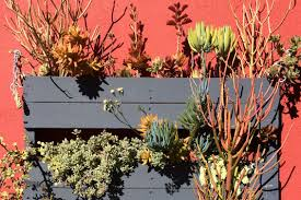 Vertical Succulent Garden Pallet Make A Vertical Succulent Garden Better Homes And Gardens