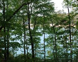 Little Cottages For Sale by Little Cove Creek Homes For Sale Little Cove Creek Real Estate