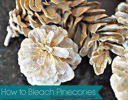 serendipity refined blog how to bleach pinecones