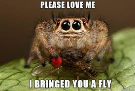 Sad Spider Meme - aww of course little spider spiders snakes scalies and other cute
