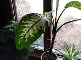 32 great house plants to bring greenery indoors choice home warranty
