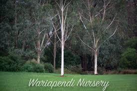 native plant nursery sydney garden gallery native plant and revegetation specialists