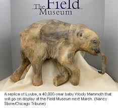 lyuba preserved woolly mammoth 40 000s