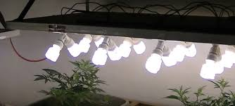 Fluorescent Light For Plants How To Yield More From The Same Grow Lights Blog About Cannabis