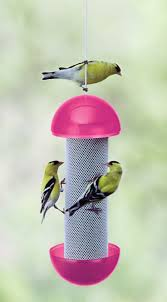 58 best finches images on pinterest finches thistles and bird