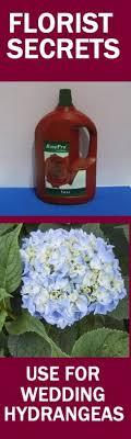 wholesale hydrangeas wedding flowers wholesale buying hydrangeas hydrangea wedding