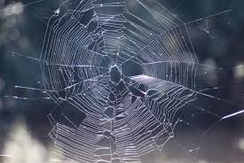 image of spiders cobweb creepyhalloweenimages