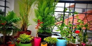 designer damenunterwã sche topfpflanzen balkon 28 images topfpflanzen s blumen blumen