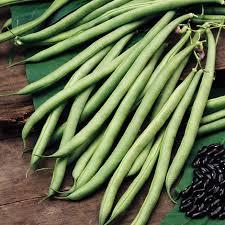 buy climbing french bean phaseolus vulgaris u0027cobra u0027 pbr bean