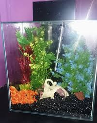 aquarium for sale like new only 50pounds carlisle cumbria