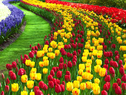 pretty wallpapers for desktop nature flower wallpaper hd for desktop free download image gallery