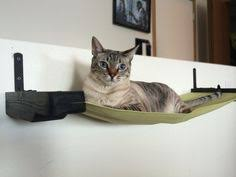 Wall Shelves For Cats Deluxe Cat Wall Play Place Animal Pinterest Cat Shelves