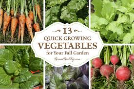 nice things to plant in a vegetable garden easy vegetables to grow