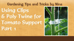 using clips and poly twine for tomato support part 1 youtube