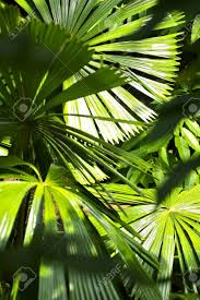 Tropical Plants Pictures - inside the jungle tropical plants vertical photo tropical photo