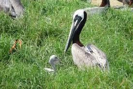 u s fish u0026 wildlife service migratory bird program conserving
